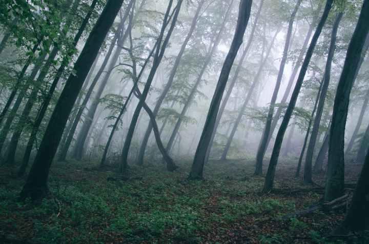 dark fog forest haze